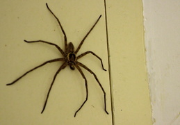 Spinne im Bungalow