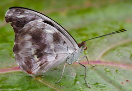 Schmetterling 03 900