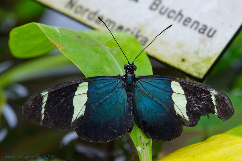 Schmetterling_08_900.jpg