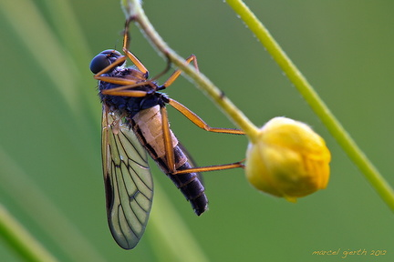 unbekannte Fliege - unknown fly